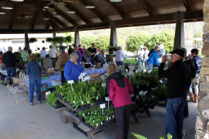 Avid and novice gardeners came in droves to the Wildflower Bunch Plant Sale to buy trees, shrubs, and flowers to make their gardens shine. (Photo by Erika Jaskiewicz)