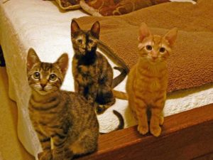 In memory of Luna, Tango, and Feather, donations directed to FeLV tests and vaccinations are accepted at Maggie's House at BCAR.