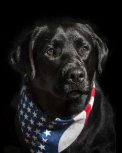 Gus is so handsome in his patriotic kerchief. (Photo by Steve Miller)